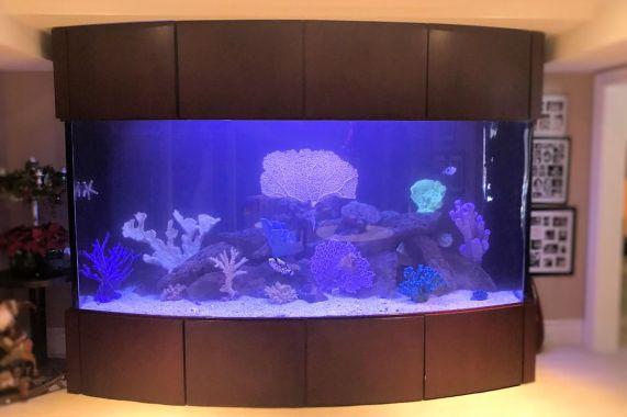 1000 Gallon Bow Front Fish Only Aquarium