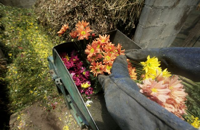 Costa Rica farmers destroy flowers as coronavirus spoils exports