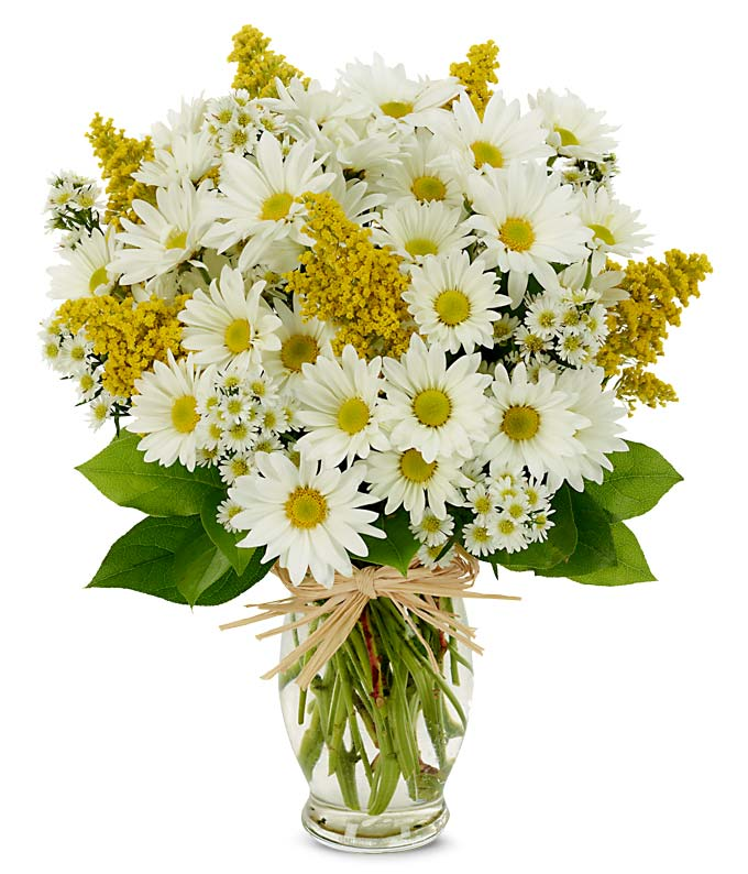 Daisy Delight At From You Flowers