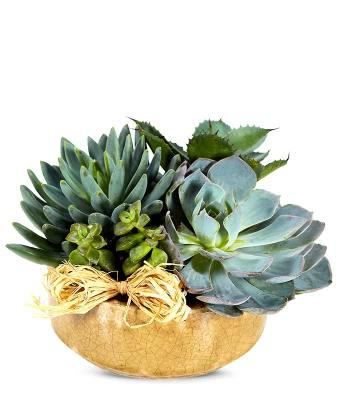 succulents for delivery