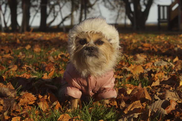 Åh så söt Fia är. Här har hon en varm luva på sig som värmer henne nu när hösten börjar komma på allvar. Foto: Peter Ahlborg
