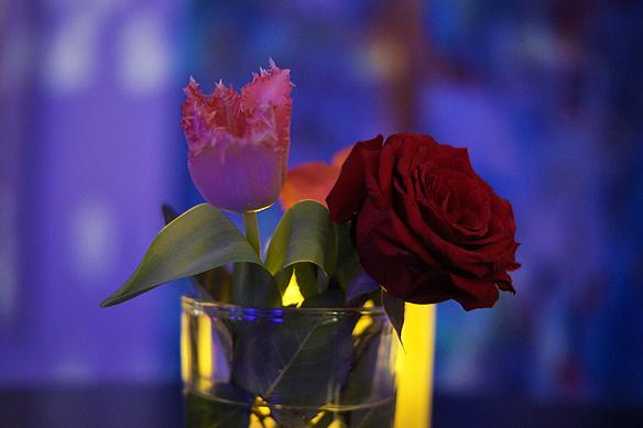 En röd ros på Mellos efterfest i Göteborg. Kärleken var påtaglig under kvällen och natten. Foto: Peter Ahlborg
