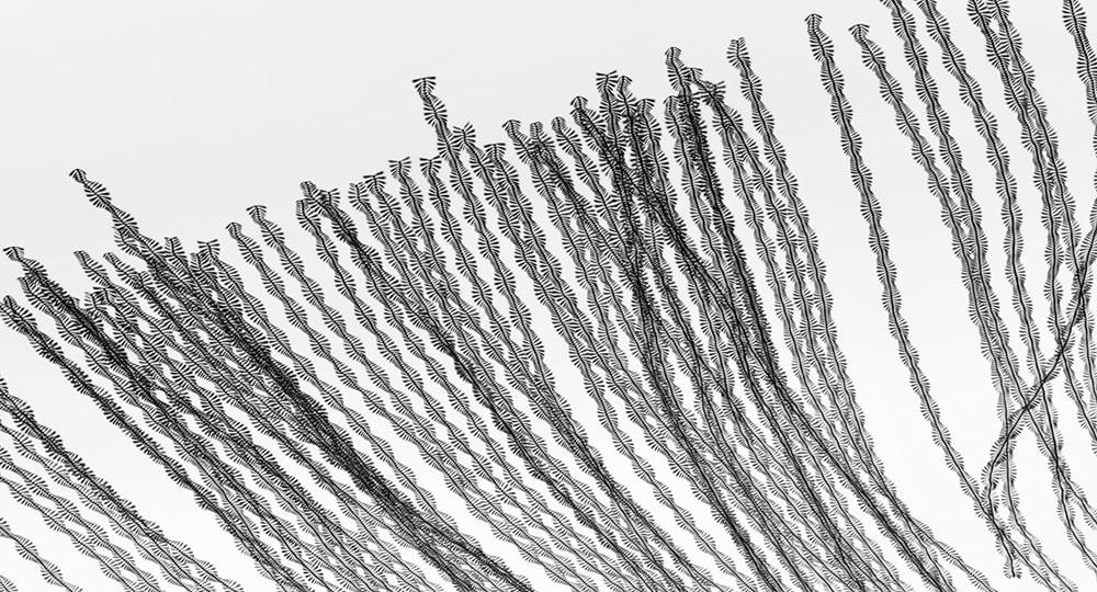 Diagonal black streaks mark the paths of many birds