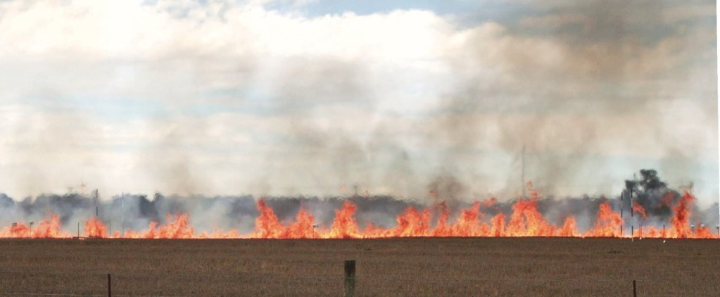 A typical grass fire with tower-like updrafts and lower troughs