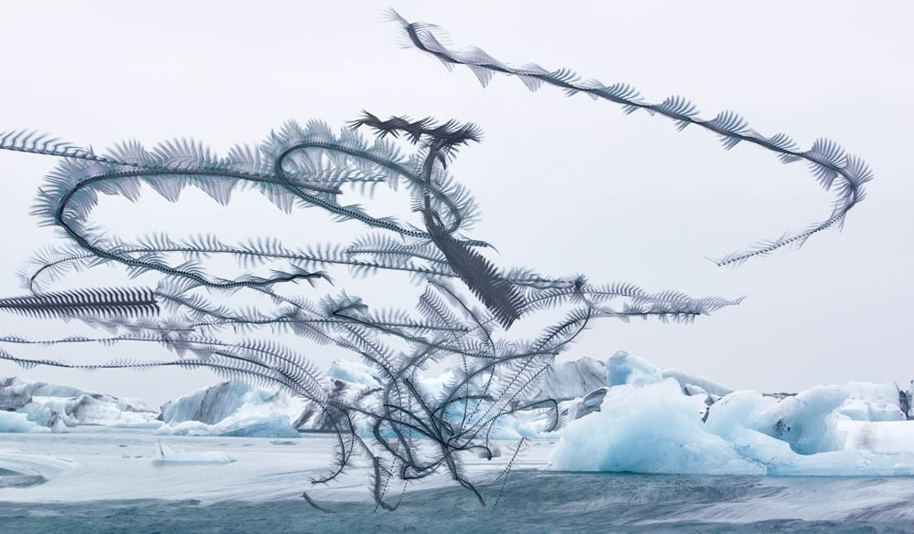 A handful of bird trajectories form a black tornado over an icefield