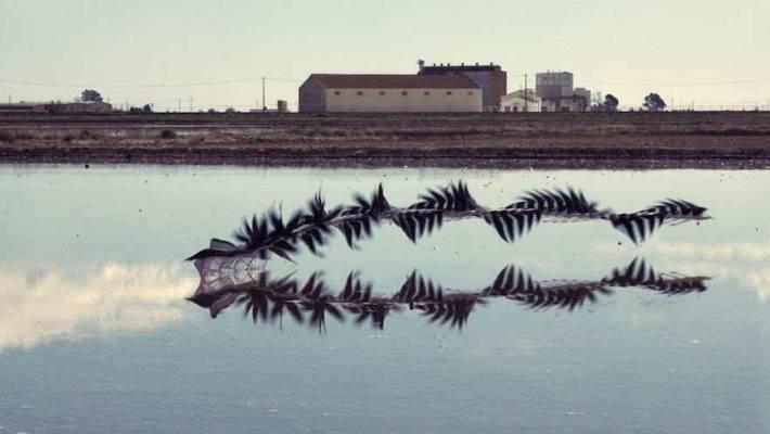 A wavy black streak marks the take-off trajectory of a bird