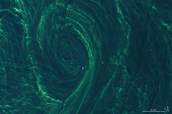 Close-up of the phytoplankton bloom.
