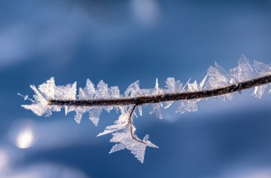 Dendritic ice crystals on a branch.