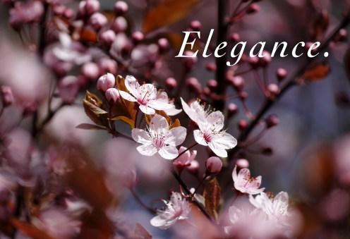 09_Elegance copy