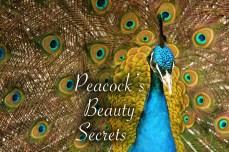 12_Peacock's_Beauty_Secrets copy
