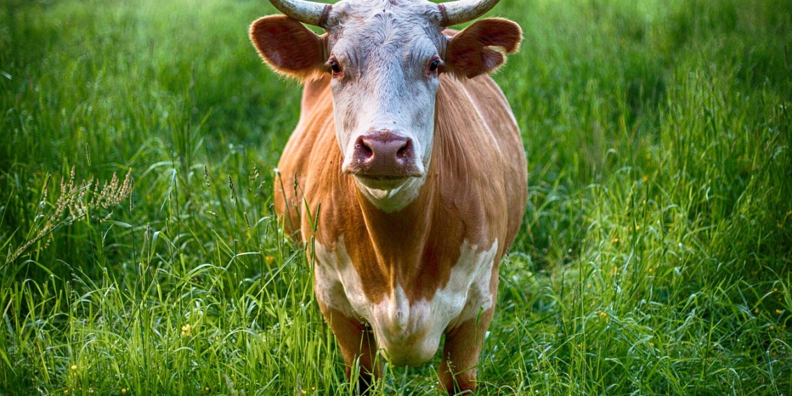Want Leather? Love Cows? Biofabrication Saves the Day