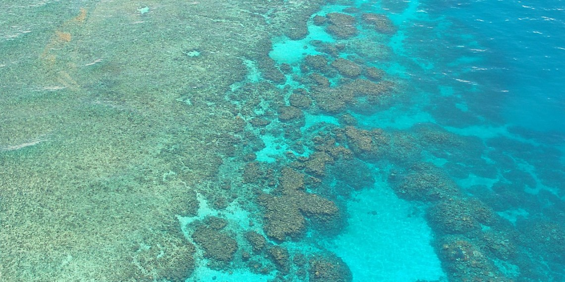 Reefs Are in Danger and Coral Vita Wants to Save Them