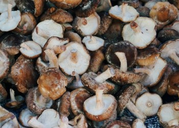 Vegan Mushroom Protein: The Future is Now