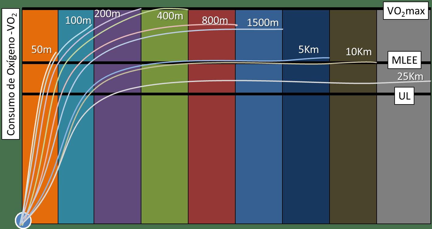 Resultado de imagen de capacidad y potencia aeróbica