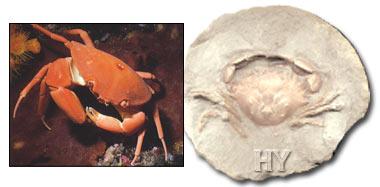 Vilken metod för datering fossiler är mer exakt