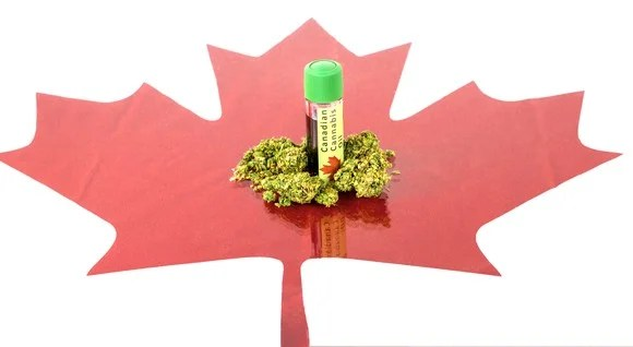 Marijuana buds and cannabis oil on top of Canadian red maple leaf cut-out