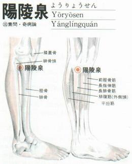 28/15:八會穴 陽陵泉 (筋 7) - 經絡學 acupuncture points - udn部落格