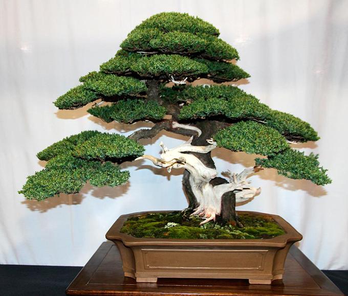 Air Bonsai Tree Sale