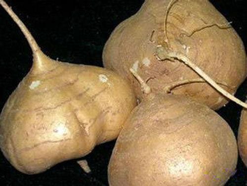 Image result for mexican fruit jicama