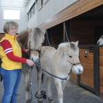 South Langley Farm Welcomes Three New Fjord Mares From Germany Aldergrove Star