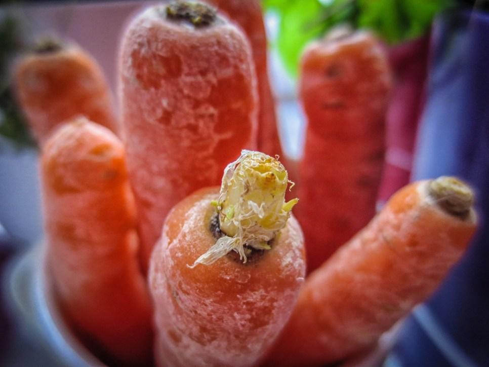 IMG_0256-carrots-Lr4-1600x