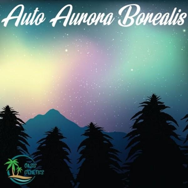 auto aurora borealis
