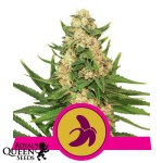 fat banana feminized seeds