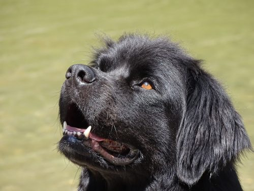 dog breeds with most health problems_canna-pet