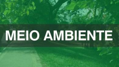 Photo of São Luís deve implantar projeto urbanístico em área verde