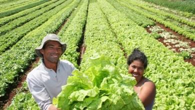 Photo of Agricultores: Nossas Heroínas e Heróis Anônimos