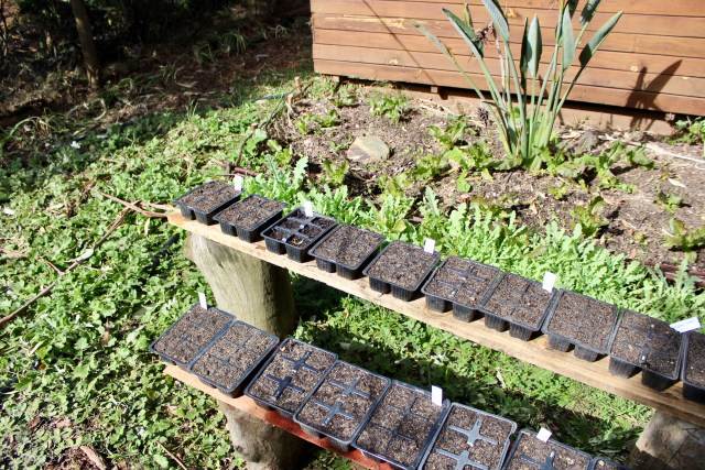 seedling beds