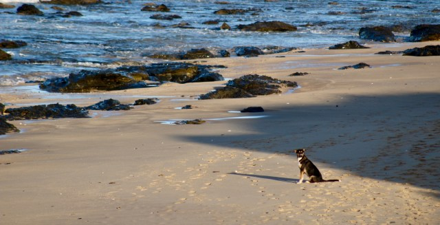 dog 1 jeffreys bay