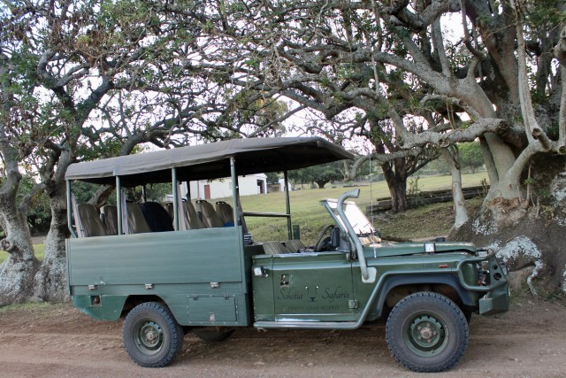 safari schotia game drive car