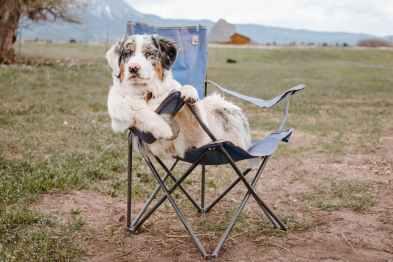 Qué valor tiene el perro en un divorcio