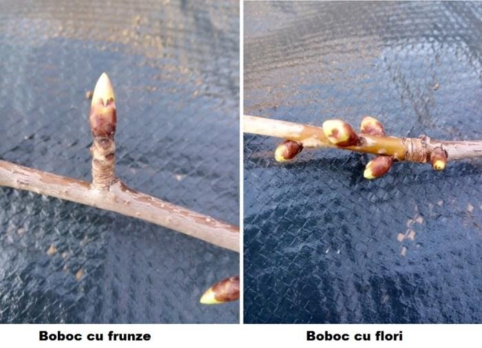 Obraznicaturi: boboc cu frunze vs. floare
