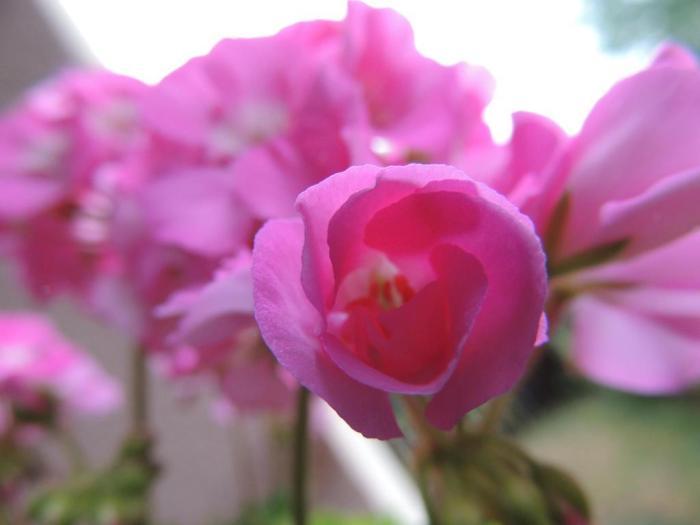 Obraznicaturi - Cum cresti cele mai frumoase muscate