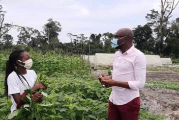 Le Gabon crée cinq Zones agricoles à forte productivité