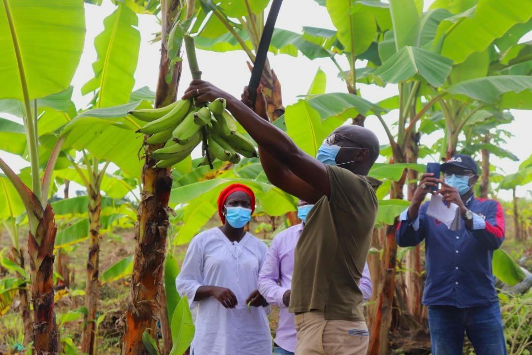 Production agricole et avicole : le gouvernement encourage les exploitants nationaux
