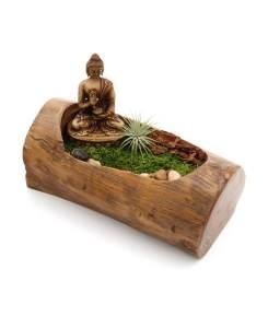 Natural Tree Branch Buddha Terrarium (1)