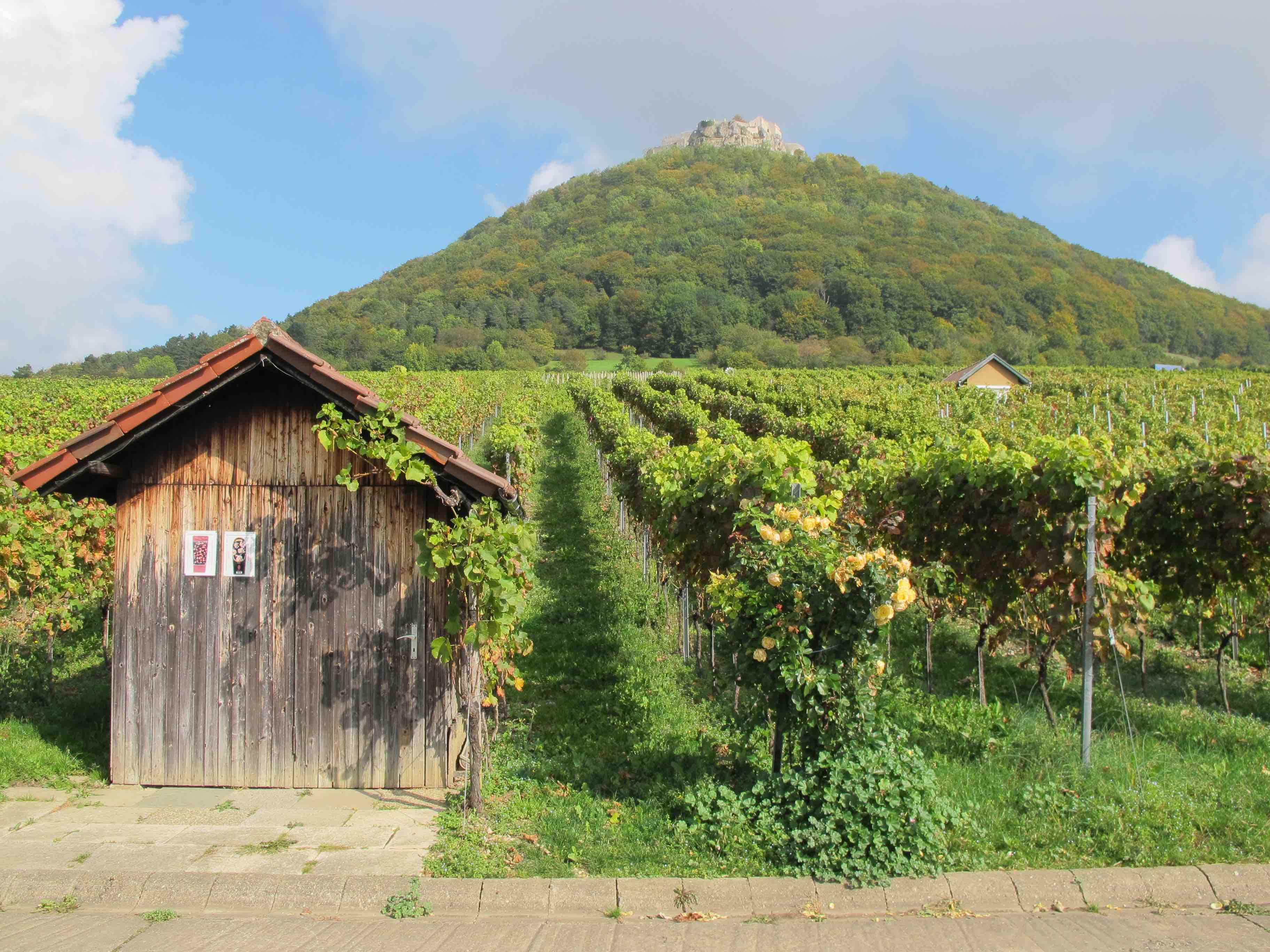 Weinbau Wuerttemberg