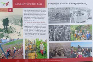 Infotafel am Weinerlebnisweg, mit Unterstützung von Margit und Sieghilde Rapp