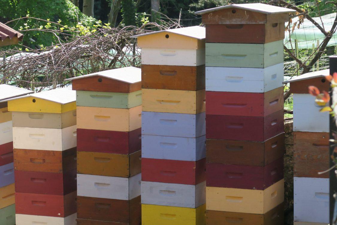 Imkerei Bienen Paris