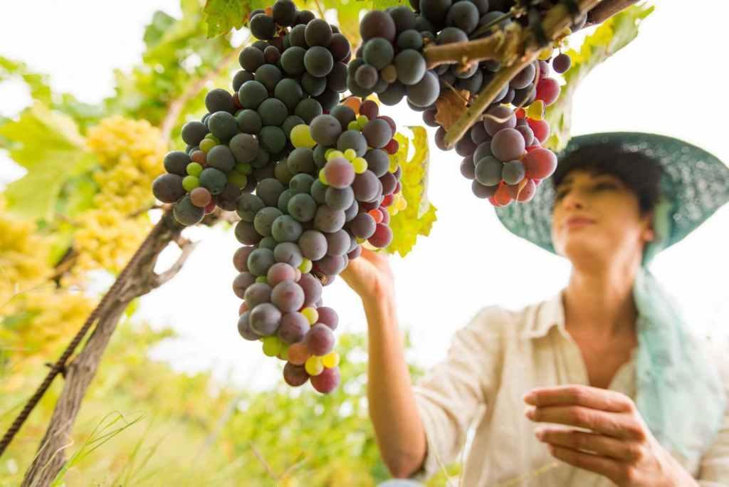 Fotografo-azienda-vini-maradei4-1024x684 Azienda agricola Maradei Saracena / Cosenza