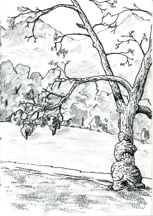 Walnut view at Kyok-Sarai