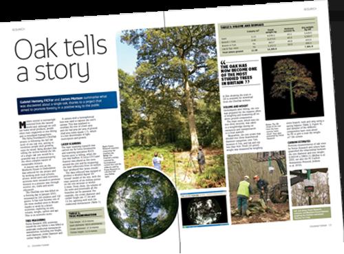 Oak tells a story article