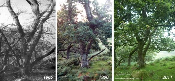 Piles Copse tree 2