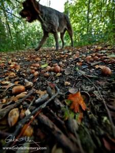 Acorns and dog walking