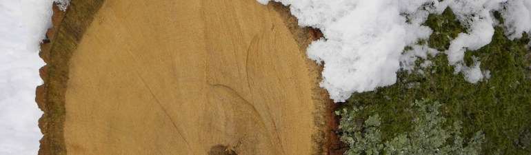 oak log in snow