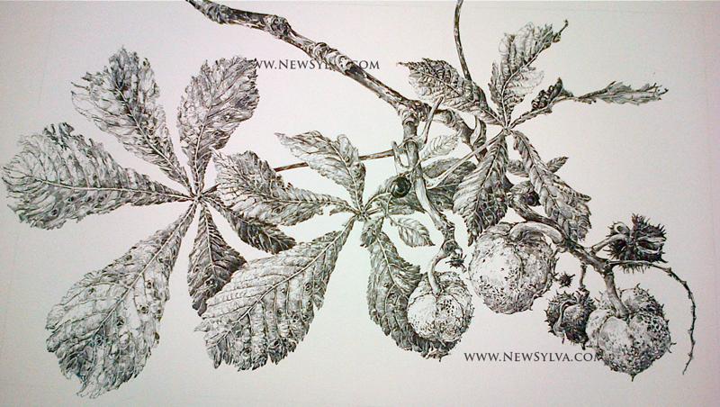 Horse Chestnut leaves & fruits