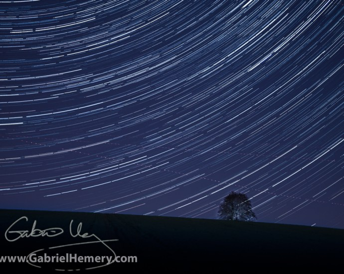 Startrail over tree clump